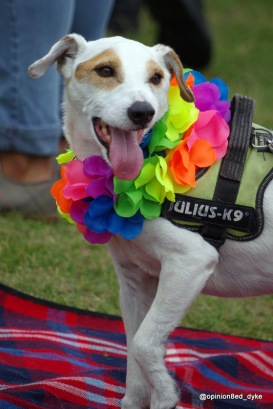 cute small white dog, wearing a rainbow garland, at Pride, tongue out, and one paw up