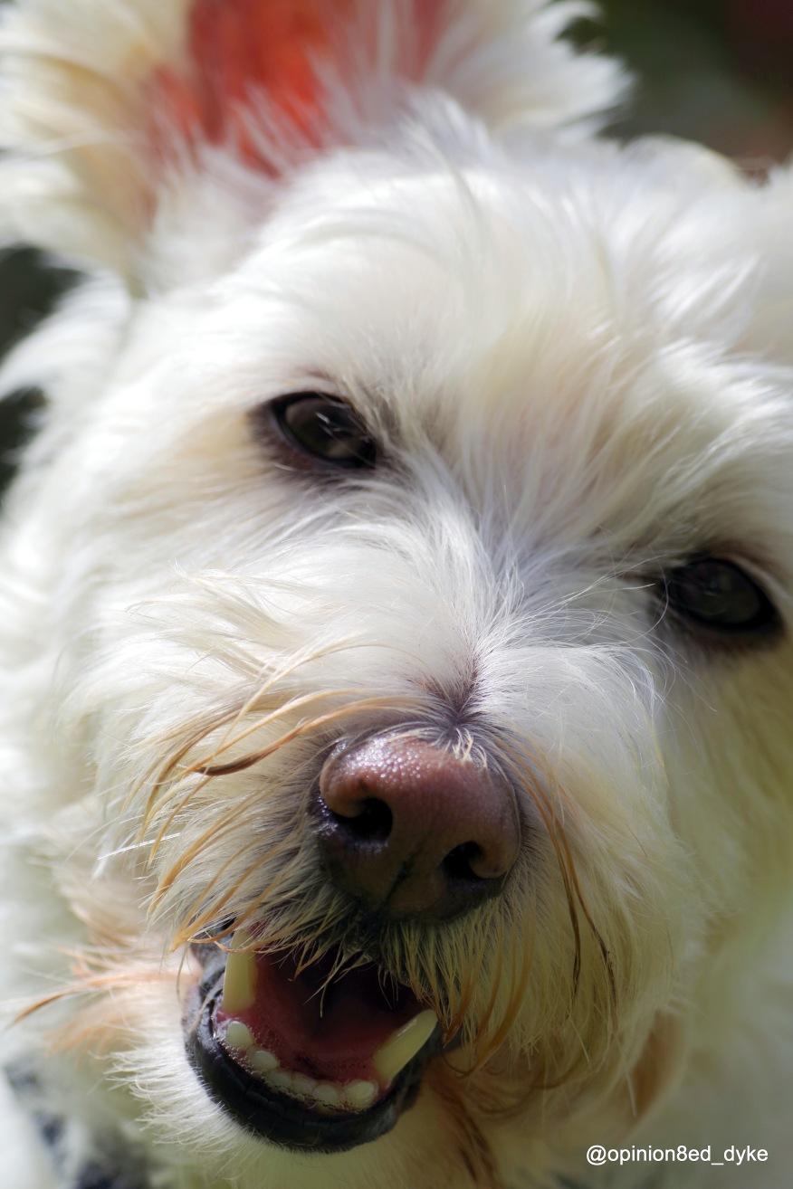 IMGP1408-dog-cute-head-side-close up