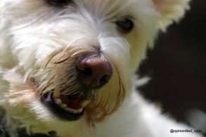 IMGP1415-dog-cute-head-bear like-close up